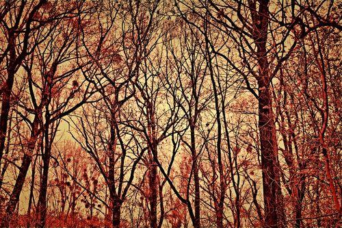 Wald-001-6000c-red-6reduz