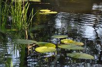 Serrosenblätter am Teichrand von Isabell Tausche