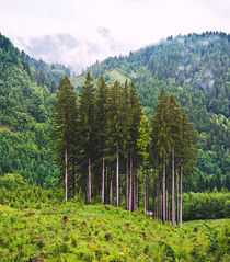 Group of conifer trees in mountain landscape von creativemarc