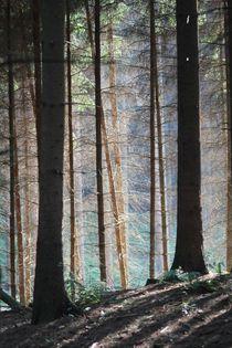 Eikamp von © Ivonne Wentzler