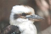 Kookaburra - Der lachende Hans - Vogel by Jörg Hoffmann