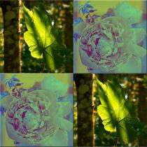 """Viererbild """"Blatt und Blüte"""" by lisa-glueck"""