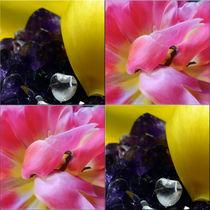 """Viererbild """"Kristall und Blüten"""" von lisa-glueck"""