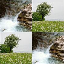Viererbild-pustewiese-und-sprudelwasser