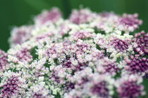 Blumenstrauß von Jens Berger