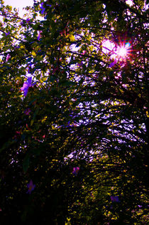Sonne im Baum von framboise