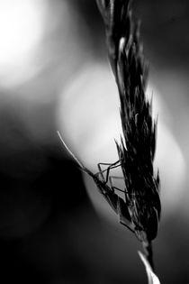 Mondsänger von Bastian  Kienitz