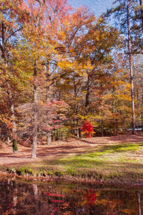 Fall in the Ozarks von John Bailey