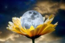 Daisy Moon by CHRISTINE LAKE