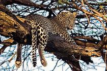 Leopard von Antonio Jorge Nunes