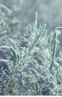 Stille Gräser von © Ivonne Wentzler