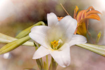 Two Lilies by Judy Hall-Folde