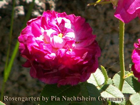 Rosengarten-by-pia-62
