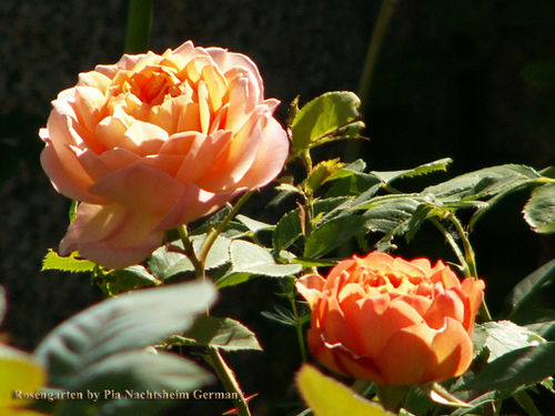 Rosengarten-by-pia-67