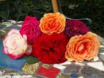 Austin Roses von Pia Nachtsheim