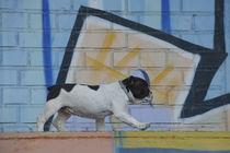 Graffiti Hund / 1 von Heidi Bollich