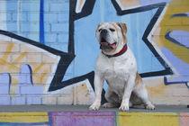 Graffiti Hund / 2 von Heidi Bollich