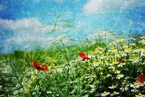 Sommerregen. von Alexandra Köbe