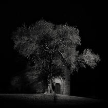 In the Shadows von Antonio Jorge Nunes