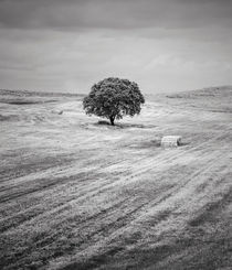 Rural Landscape #3 by Antonio Jorge Nunes