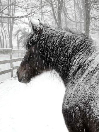 Bay-snowy-lightened