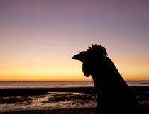 Chicken at sunset von dreamcatcher-media