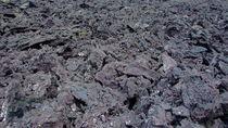 Plants-in-lava-rock