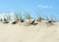 Grass on sand dunes von dreamcatcher-media