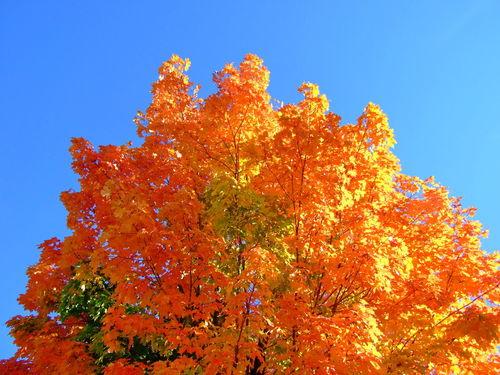 Sunlit-autumn-tree
