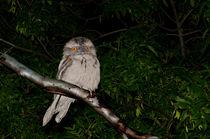 Australian Tawny Frogmouth von Chris Edmunds