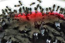 Ameisen, Ants von Heike Loos