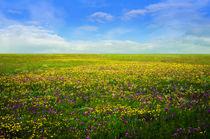 blossoming field  von larisa-koshkina