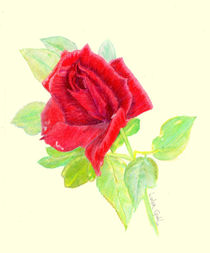 A Rose for Trinity von Linda Ginn