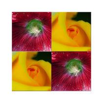 """Viererbild """"Blütenköpfe"""" pp by lisa-glueck"""
