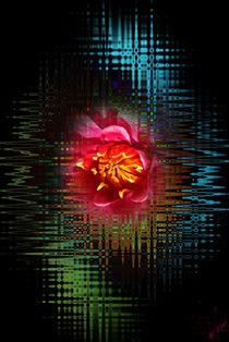 Blütenträume 14 by Walter Zettl