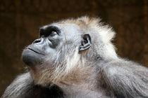Gorilla von Marcus Skupin