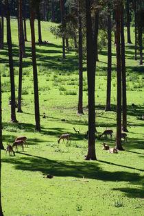 Wald / Forrest von Marcus Skupin