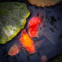 Koi Fish Beg For Food von Priya Ghose