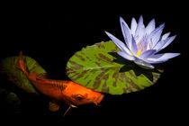 Gold Koi And Blue Waterlily by Priya Ghose
