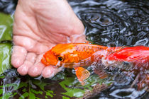 A Koi In The Hand von Priya Ghose