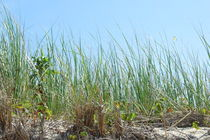 Beach grass on the sand dunes von dreamcatcher-media