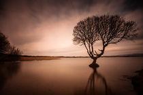 The Kenfig Pool Tree von Leighton Collins