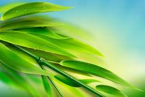 Fresh Bamboo von Bedros Awak