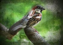 Chickadee-too