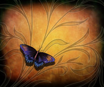 Butterfly Pause V2 by Bedros Awak