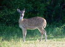 Deer von Karen Cowled