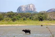 Elephant Rock von Karen Cowled
