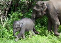 Mother and Baby Elephant von Karen Cowled