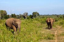 Elephants von Karen Cowled