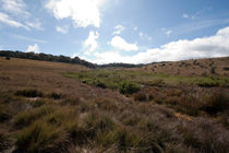 Horton Plains by Karen Cowled